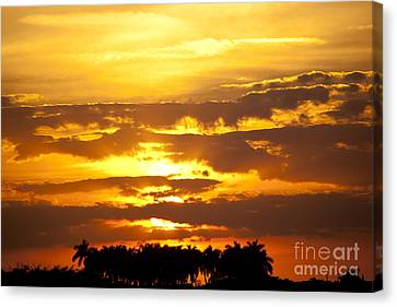 Southern Sunset Canvas Print by Michelle Wiarda