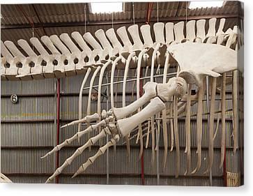 Southwest Australia, Albany, Whale Canvas Print by Walter Bibikow