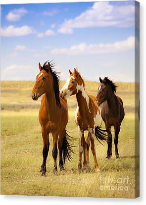 Southwest Wild Horses On Navajo Indian Reservation Canvas Print by Jerry Cowart