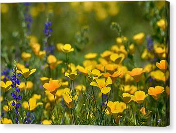 Southwest Wildflowers  Canvas Print by Saija  Lehtonen