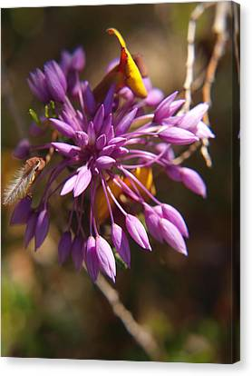 Sowerbaea Laxiflora Canvas Print by Michaela Perryman