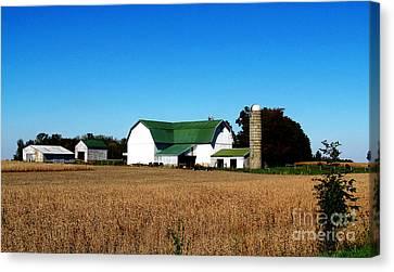 Soybean Farm Canvas Print by Tina M Wenger