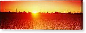 Soybean Field At Sunset, Wood County Canvas Print