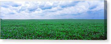 Soybean Field, Coles, Philo, Urbana Canvas Print