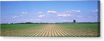 Soybean Field In A Landscape, Marion Canvas Print