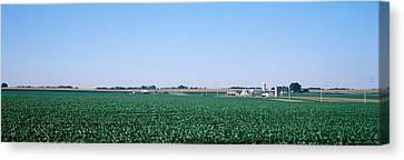 Soybean Field Ogle Co Il Usa Canvas Print