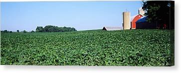 Soybean Field With A Barn Canvas Print