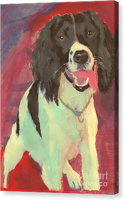 Spaniel  Canvas Print by John Morris
