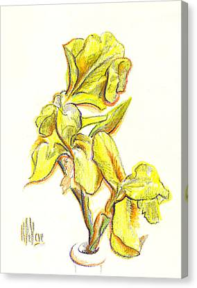 Spanish Irises Canvas Print