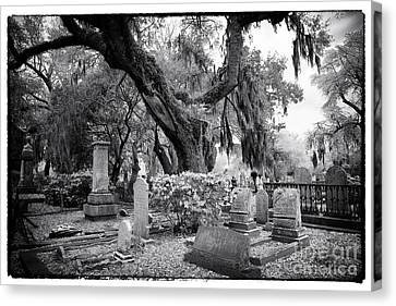 Spanish Moss In The Cemetery Canvas Print by John Rizzuto