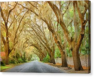 Live Oaks Canvas Print - Spanish Moss - Symbol Of The South by Christine Till