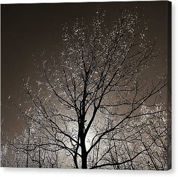 Sparkling Branches Canvas Print by Kathi Mirto