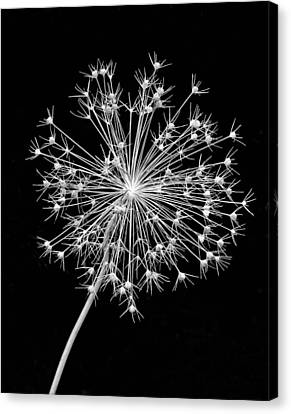 Sparkling Bw Canvas Print by Steve Harrington