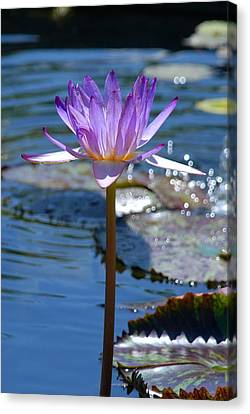Sparkling Purple Water Lily Canvas Print