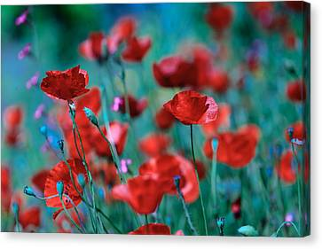 Sparkling Red Canvas Print by Uri Baruch