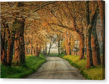 Sparks Lane Canvas Print by Jay Stockhaus