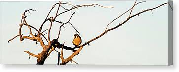 Sparrow Hawk Perching On Bare Tree Canvas Print by Panoramic Images