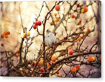 Sparrow In A Crab Apple Tree Canvas Print by Peggy Collins