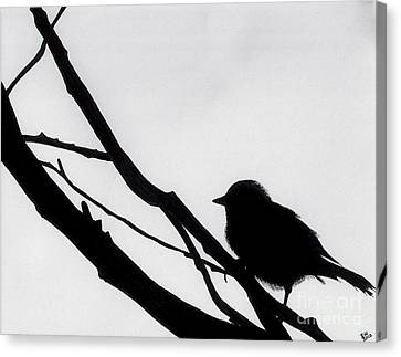 Canvas Print featuring the drawing Sparrow In A Gray Sky by D Hackett