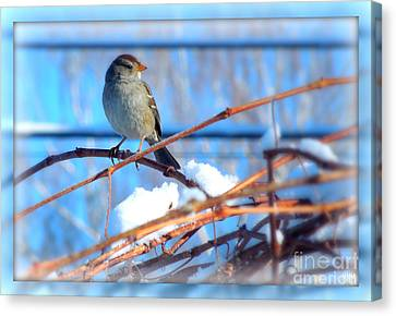 Canvas Print featuring the photograph Sparrow On Grapevine by Heidi Manly
