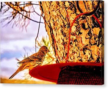 Sparrow Pine Tree Feeder Canvas Print by Bob and Nadine Johnston