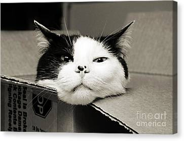 Special Delivery It's Pepper The Cat  Canvas Print by Andee Design