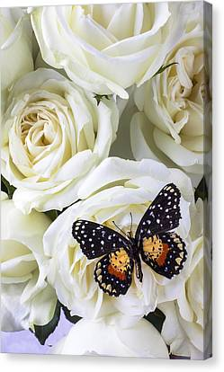 White Flower Canvas Print - Speckled Butterfly On White Rose by Garry Gay