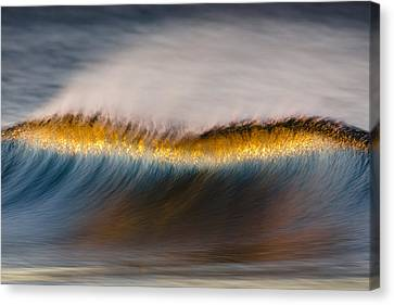 Canvas Print featuring the photograph Speckled Crest Mg_7952 by David Orias
