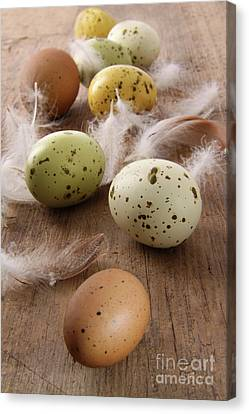 Speckled Easter Eggs  On Wooden Table  Canvas Print by Sandra Cunningham