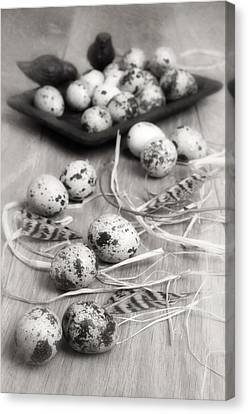Quail Canvas Print - Speckled Quail Eggs by Amanda Elwell