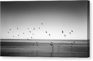 Spectacle Of Flight Canvas Print by Peter Scott