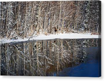 Spectacular Winter Moose Canvas Print by Ron Day