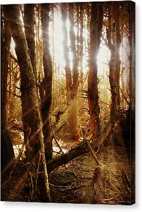 Canvas Print featuring the photograph Spellbound by Micki Findlay
