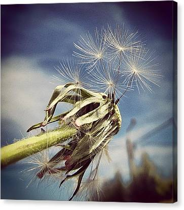 Instamood Canvas Print - Spent Wishes... by Marianna Mills