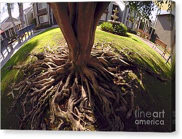 Canvas Print featuring the photograph Spherical Rooting by Clayton Bruster
