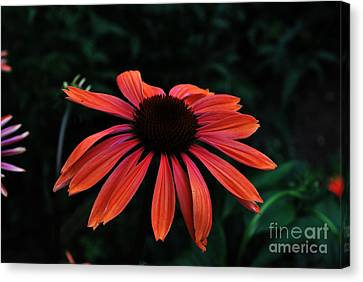 Canvas Print featuring the photograph Spicy by Judy Wolinsky