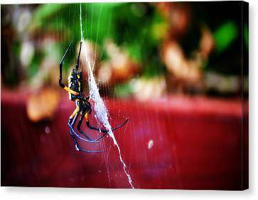 Spider And Web Canvas Print by Adam LeCroy