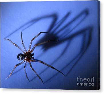 Spider Blue Canvas Print by Jennie Breeze