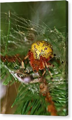 Spider Canvas Print by Dan Sproul