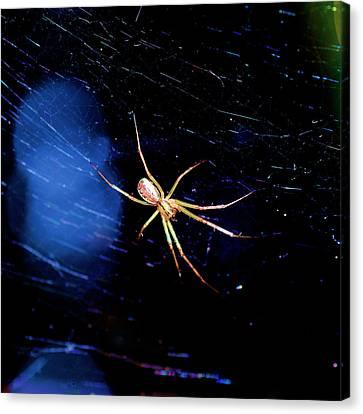 Spider In Web Canvas Print