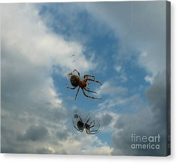 Spider Canvas Print by Jane Ford