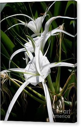 Spider Lily Canvas Print by Kaye Menner