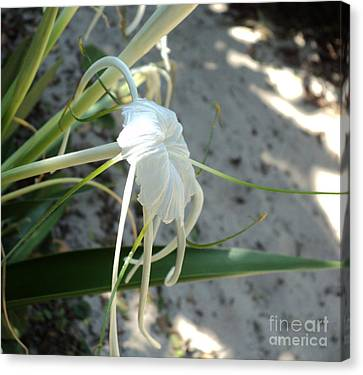 Canvas Print featuring the photograph Spider Lily2 by Megan Dirsa-DuBois