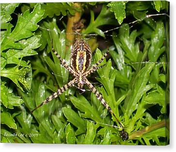 Canvas Print featuring the photograph Spider Making Web by Belinda Lee