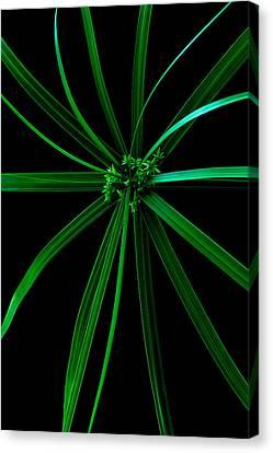 Spider Plant Canvas Print by Marwan Khoury