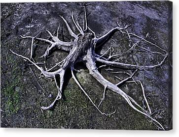 Canvas Print featuring the photograph Spider Roots At Manasquan Reservoir by Gary Slawsky