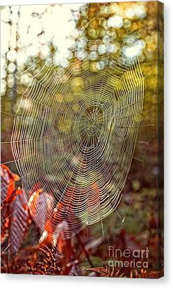 Spider Web Canvas Print by Edward Fielding