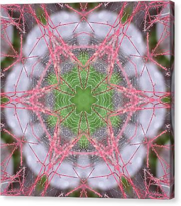 Spider Web On Smokebush Canvas Print by Trina Stephenson