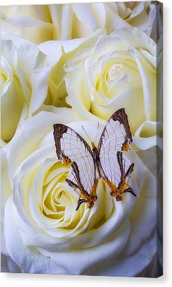 Spider Web Pattern Butterfly Canvas Print by Garry Gay