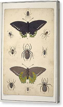 Spiders And Butterflies, Artwork Canvas Print by Science Photo Library